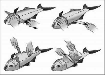 How to fillet your catch for How to make fish fillet